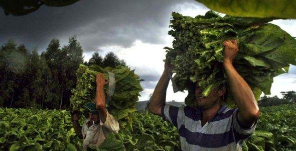 Reajuste do preço do Tabaco é firmado com a Empresa Souza Cruz