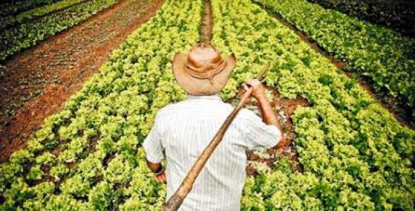 Caixa disponibiliza R$ 6 bilhões para linha de Custeio Antecipado no Crédito Rural