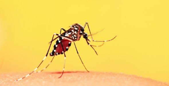 Vacinação contra febre amarela é incentivada após mortes em MG
