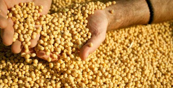 Preço da soja catarinense pode sofrer alterações com Donald Trump