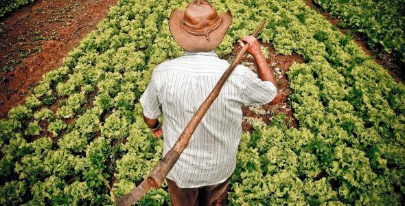 Agropecuária catarinense estima faturamento de R$ 27 bilhões em 2017