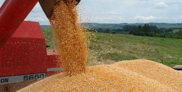 Programa de incentivo do Estado paga a agricultores R$ 34 pela saca de milho