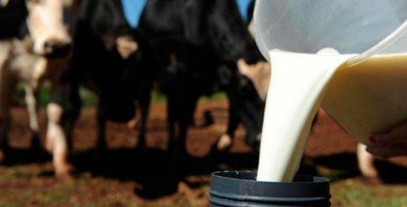 Santa Catarina é o quarto maior produtor de leite industrializado do país