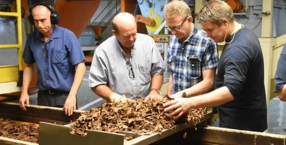 Tabacos Dark e Maryland têm 100% da produção certificada pelo MAPA/Inmetro