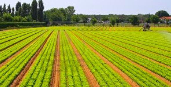 Plano Safra da Agricultura Familiar terá R$ 30 bilhões em créditos para produtores rurais