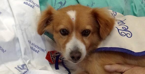 Cão terapia anima tarde de pacientes em hospital no litoral