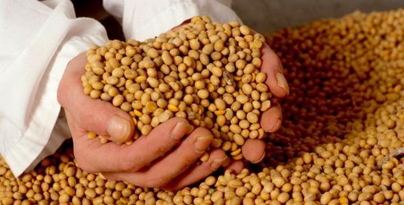 Região de Canoinhas concentra maior produção de soja em Santa Catarina
