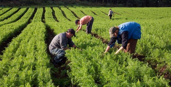 Projeto na área rural incentiva uso da tecnologia na agricultura familiar