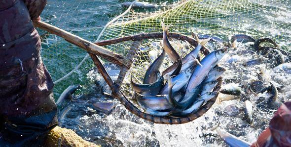 Secretaria de Pesca regulariza situação de 10 mil pescadores catarinenses