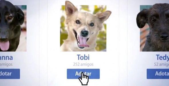 Neovox assina campanha para a Diretoria do Bem-Estar Animal da Prefeitura de Florianópolis