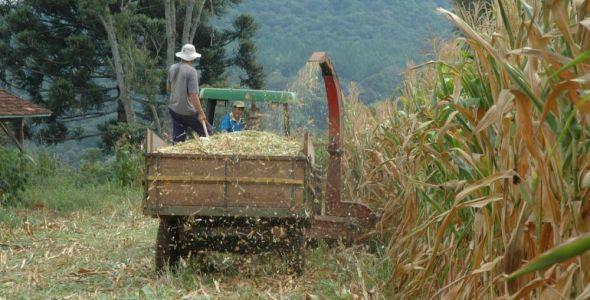 Agricultores do Oeste investem na produção de silagem