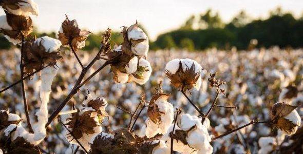 Senior lança solução para gestão de contratos e vendas de grãos e algodão