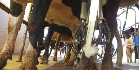 Produção catarinense de leite aumenta 82% em dez anos