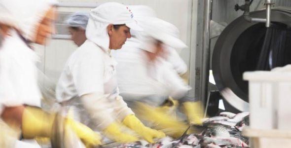 Industria da Pesca debate suspensão de exportações com o MAPA