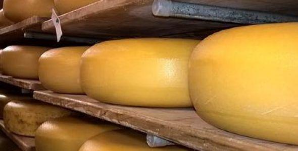 Produção e comercialização de queijos artesanais é regulamentada
