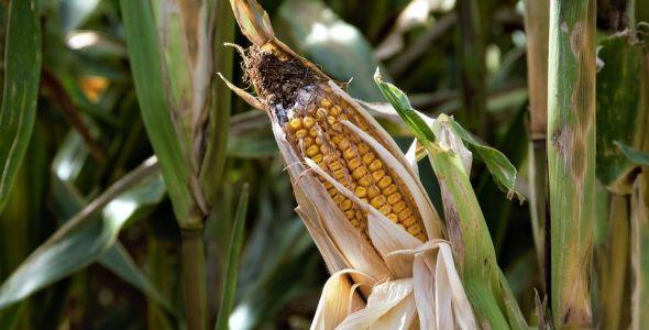 Secretaria da Agricultura lança Programa Terra-Boa 2018