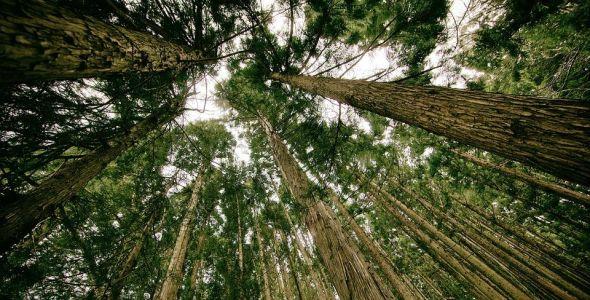 Audiência pública discute alterações do licenciamento ambiental no país