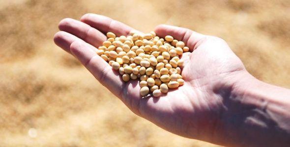 Santa Catarina tem exportação recorde de soja em 2017