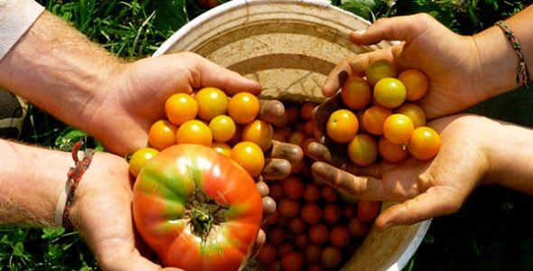 Encontro em Itajaí debate agricultura biodinâmica