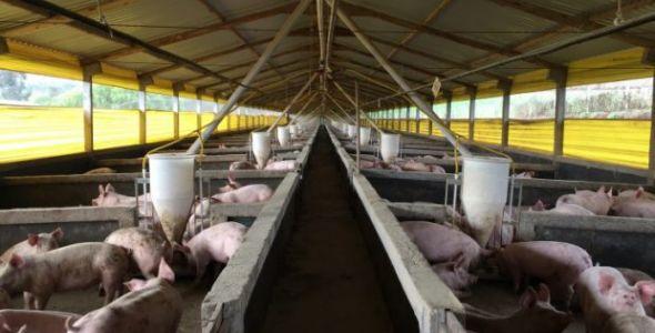 Santa Catarina embarca segundo lote de carne suína para Coreia do Sul