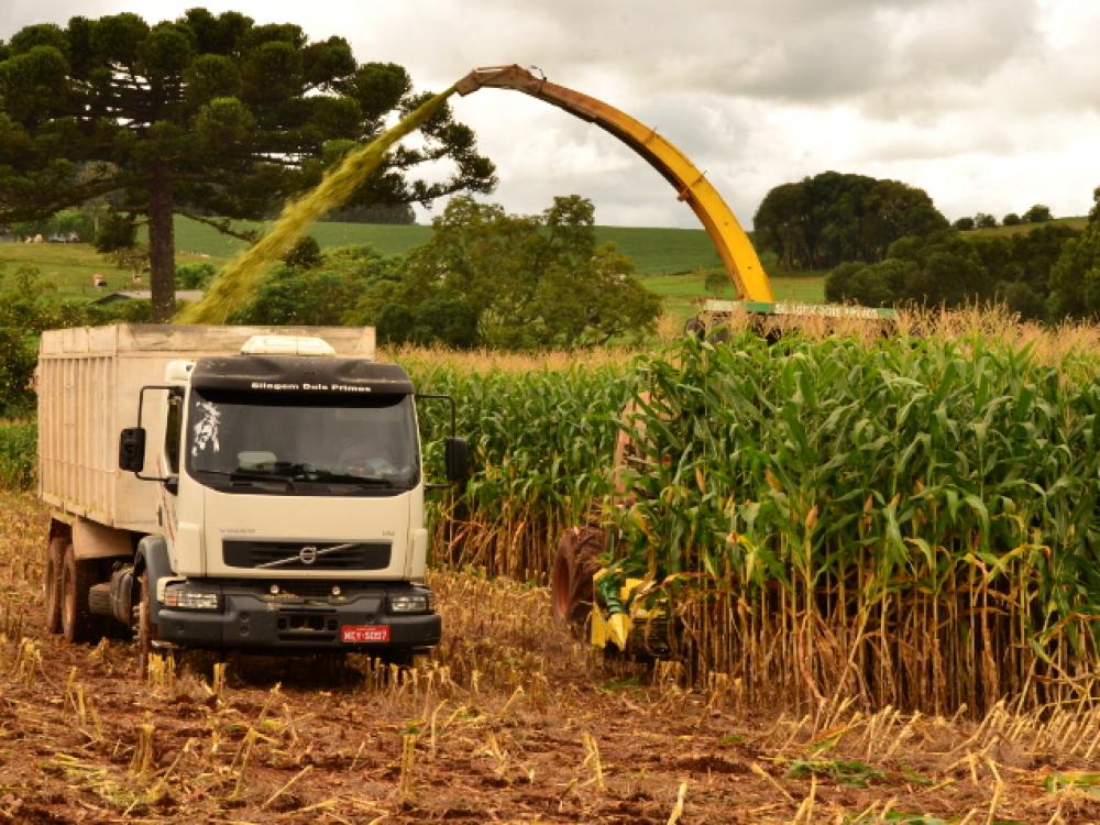 Agropecuária catarinense tem preços em alta e apreensão com estiagem