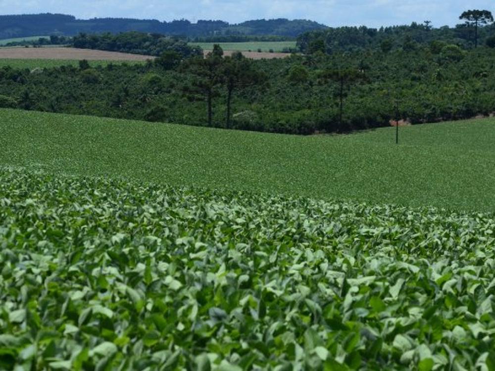 Governo do Estado investe R$77,4 milhões em programas de fomento agropecuário